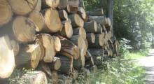 Kend din skov - søndag 15. oktober kl. 13.00-16.00